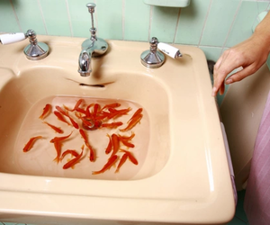 fish, sink, and water image
