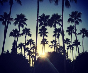 palm trees, sun, and summer image