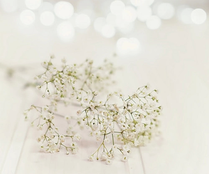 flowers, girly, and white image