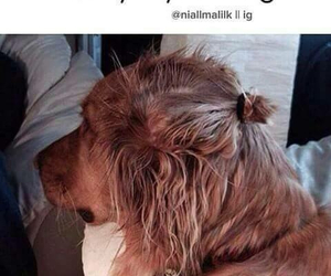 dog, Harry Styles, and one direction image