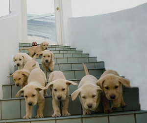 puppies, djur, and who let the dogs out image
