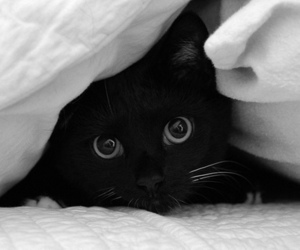 black, eyes, and fluffy image