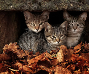 adorable, nature, and autumn image