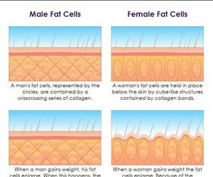 biology, fat, and cells image