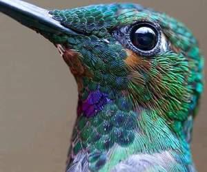 amazing, bird, and blue image