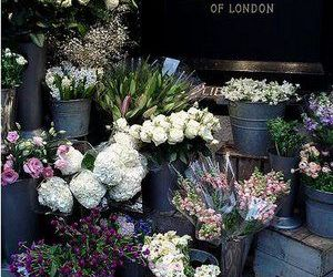flowers, london, and photography image