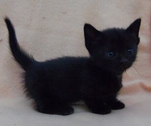 cat, black, and cute image