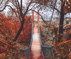 bridge and autumn image
