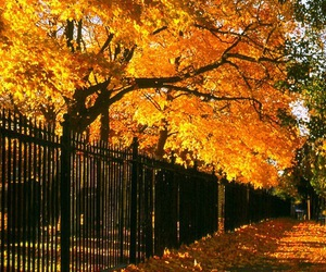 autumn, fall, and fence image