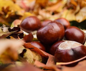 autumn, i love fall, and chestnuts image