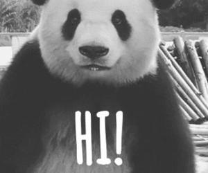 panda, hi, and black and white image
