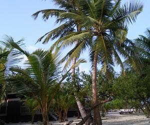 Maldives, the maldives, and kuredu image