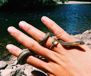 beautiful, snake, and summer image