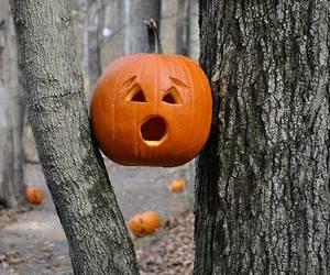 pumpkin, autumn, and tree image