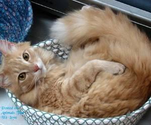 kitten, baby animals, and cute animals image