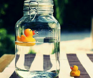 duck, water, and cute image