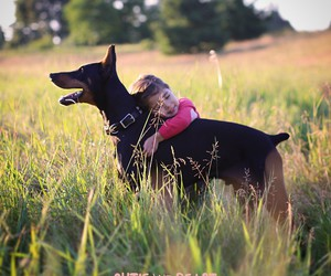 adorable and doberman image