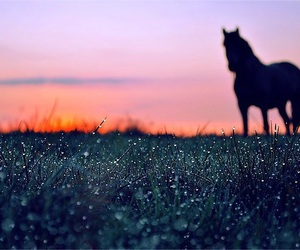 horse, sunset, and photography image
