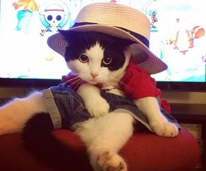 cat, cosplay, and costume image