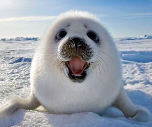 cute, animal, and seal image