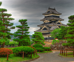 japan, nature, and trees image