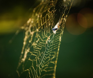 net, Poland, and spider image