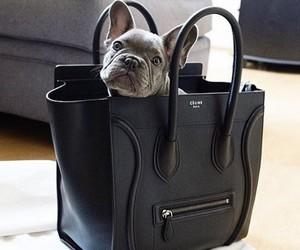 dog, bag, and celine image