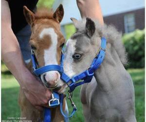 horse, small, and mini image