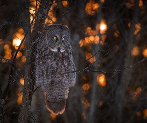 owl, amazing, and animal image