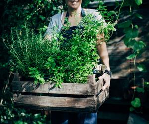 garden, herbs, and krickelin image