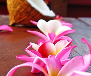 flowers, summer, and coconut image