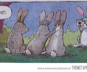 funny, rabbit, and idiot image