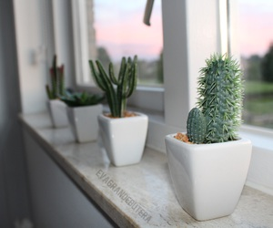 black, cactus, and girl image