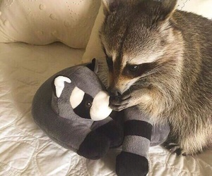 raccoon, animal, and toys image