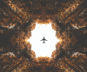 travel, plane, and tree image