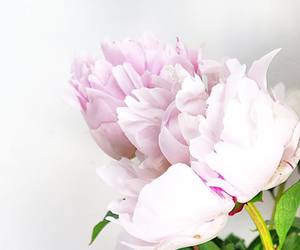 flowers, peonies, and summer image