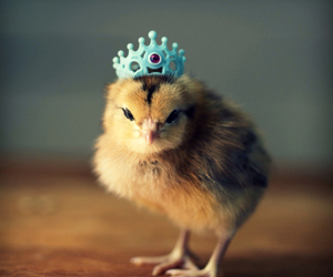 Chick and crown image