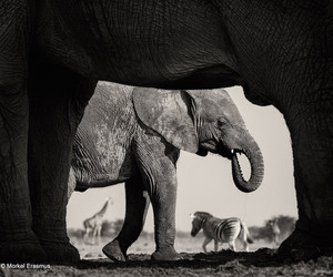 remarkable, wildlife, and finalists image
