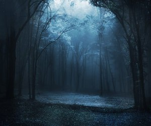 forest, tree, and blue image