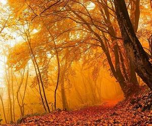 autumn, leaf, and nature image