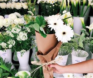 amazing, flower, and tumblr image