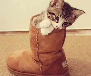 baby, pussy, and shoes image