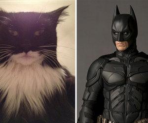 cat, batman, and funny image