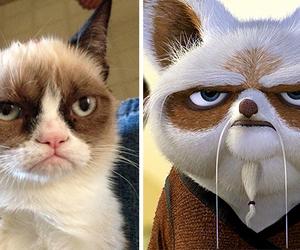 cat, kung fu panda, and movie image