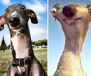 dog and sid image