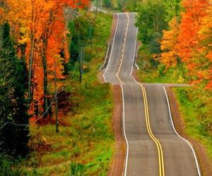 autumn, fall colors, and road image