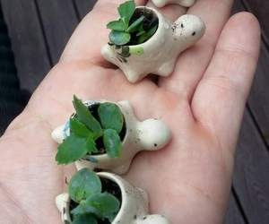 plants, turtle, and want image