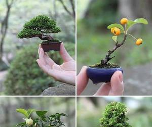 tree, bonsai, and plants image