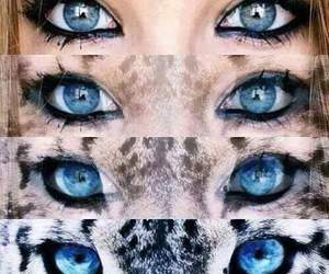 eyes, blue, and tiger image