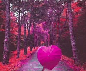 heart, pink, and tree image